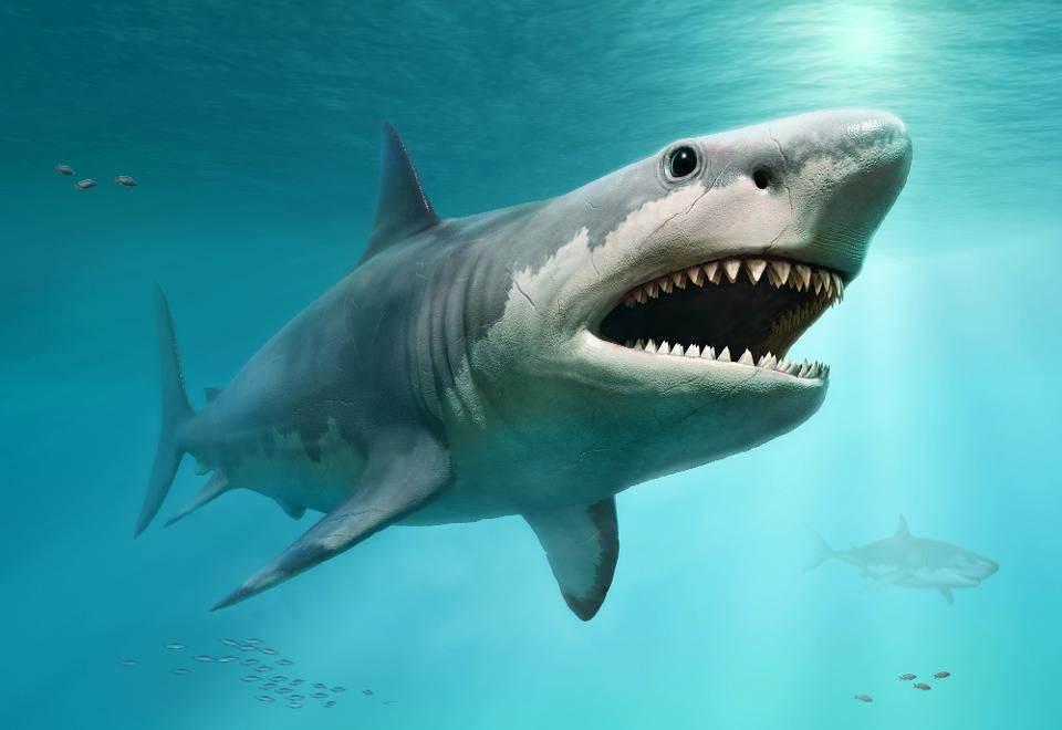 Megalodon Shark