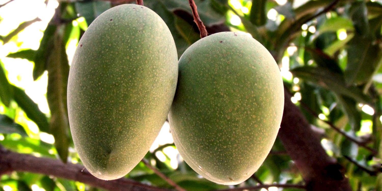 Alampur Baneshan Mango