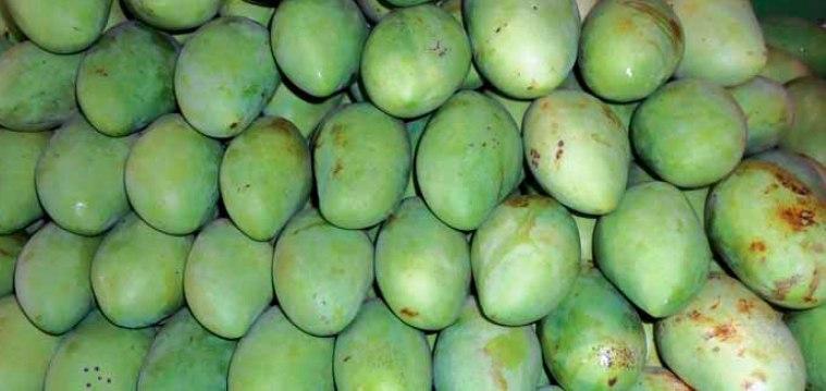 Carabao Mango