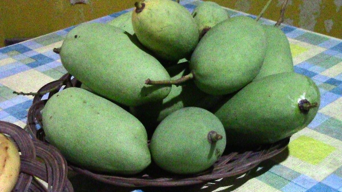 Chok Anan Mango
