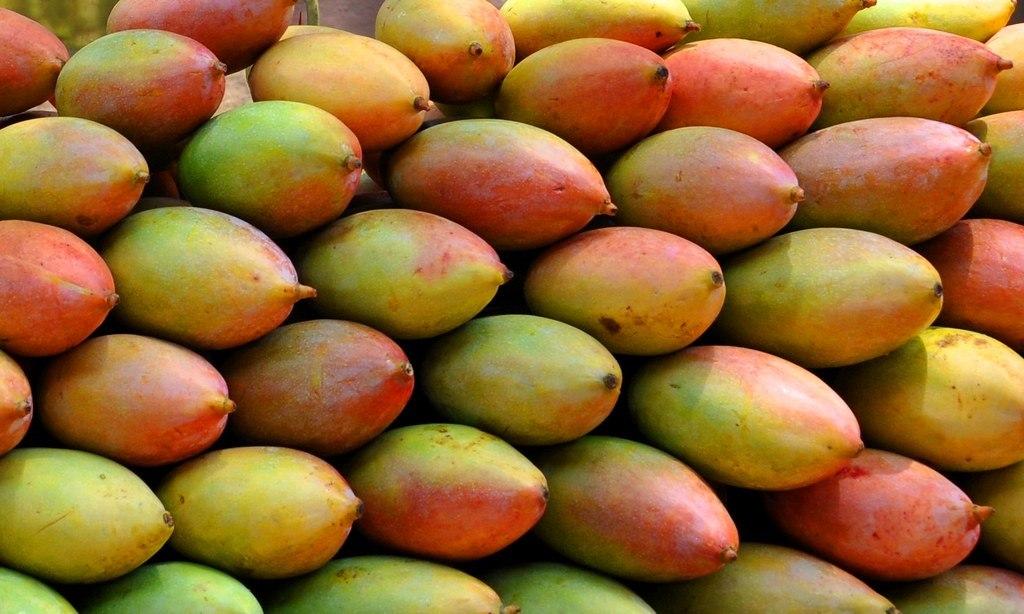 Gulab Khas Mango