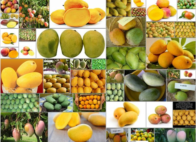 Types of Mangoes