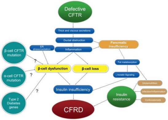 Cystic Fibrosis Related Diabetes