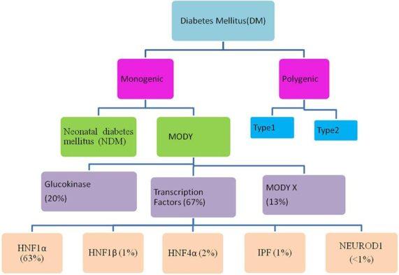 Monogenic Diabetes Syndromes