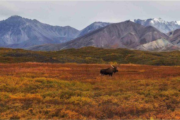Tundra Land